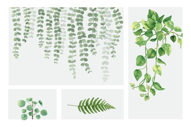 Conscious Consumption: Plants